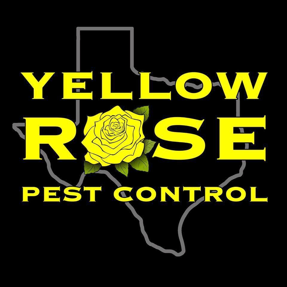 Yellow Rose Pest Control